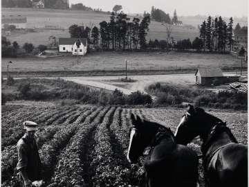 Charlottetown, Prince Edward Island, Horses and Farmer