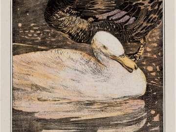 White and Black Ducks (1907 Calendar: March)