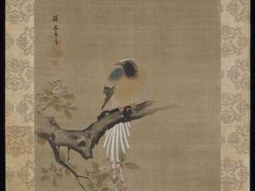 Long-tailed Bird
