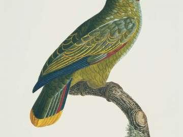 Histoire naturelle des perroquets