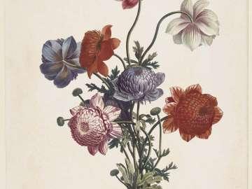 Bouquet of Anemones (Pl. 45, 12e Cahier of Prévost,