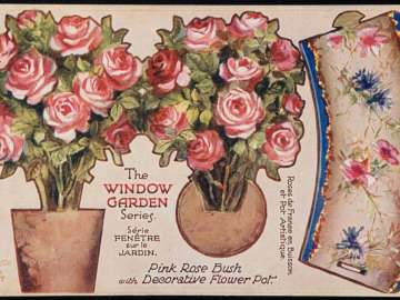 Pink rose bush with decorative flower pot. museum of fine arts