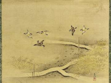 Sparrows in Rice Field