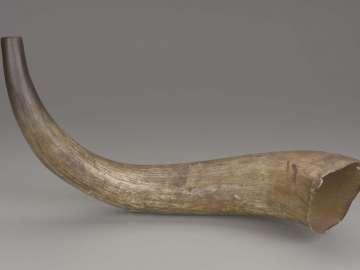 Forester's horn