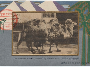 The Bactrian Camel Presented by General Oku (from an unidentified series)