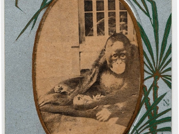 The Orangutan from the series Commemoration of the Anniversary of the Kyoto Zoological Park (Kyoto shiritsu kinen dobutsuen kinen ehagaki)