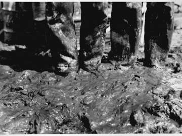 Bob Bates's and Bob Reeve's Feet, Valdez Mudflats