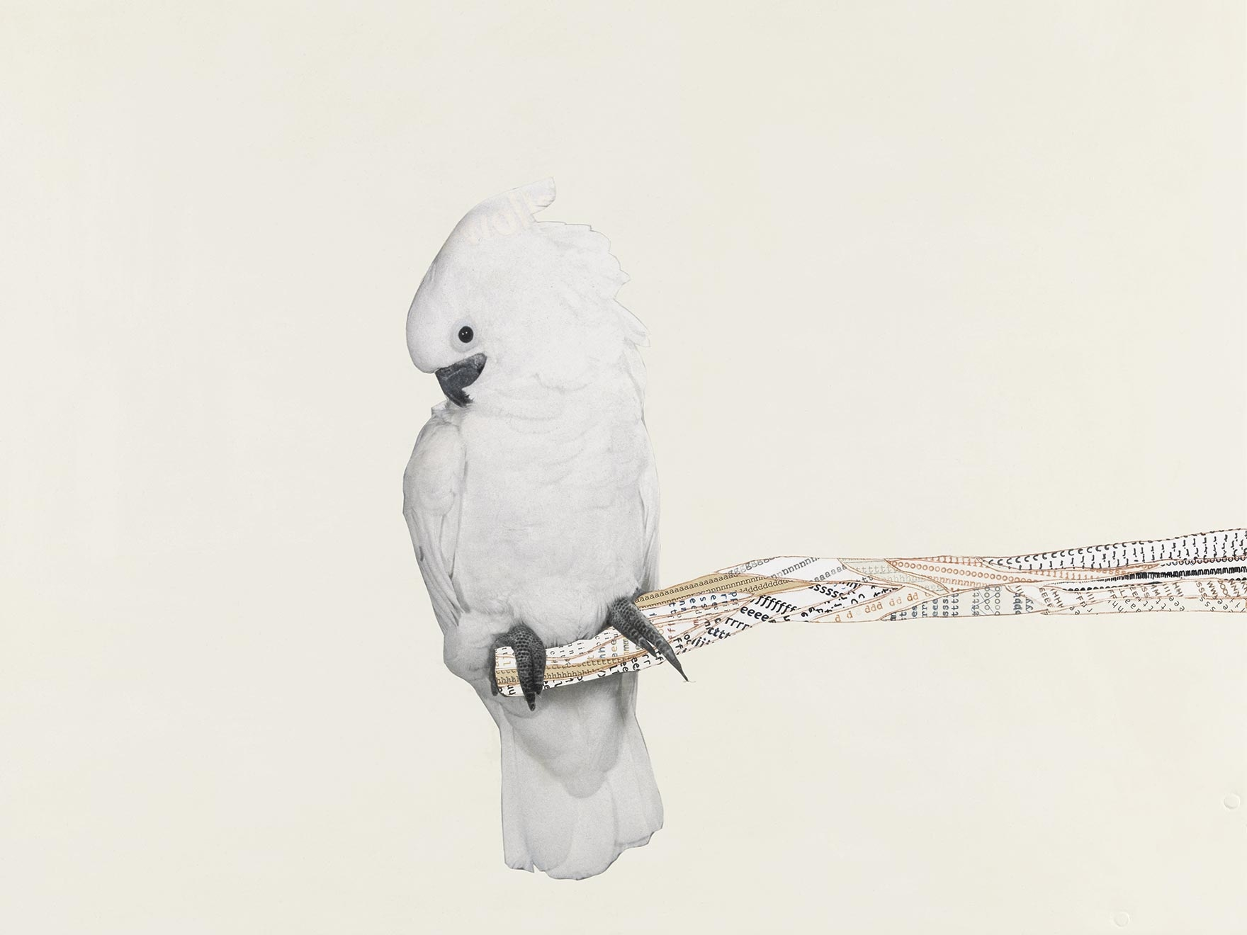 Collage of a cockatoo on a branch of text